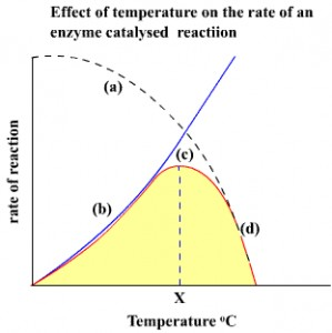 effect temperature rate enzyme catalysed reaction