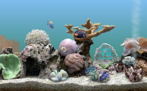 Serene Screen Marine Aquarium